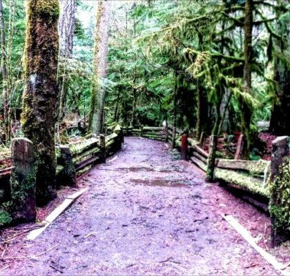 Vancouver Island Cathedral Grove